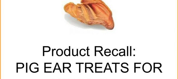 Dried pig ear treat with a recall announcement